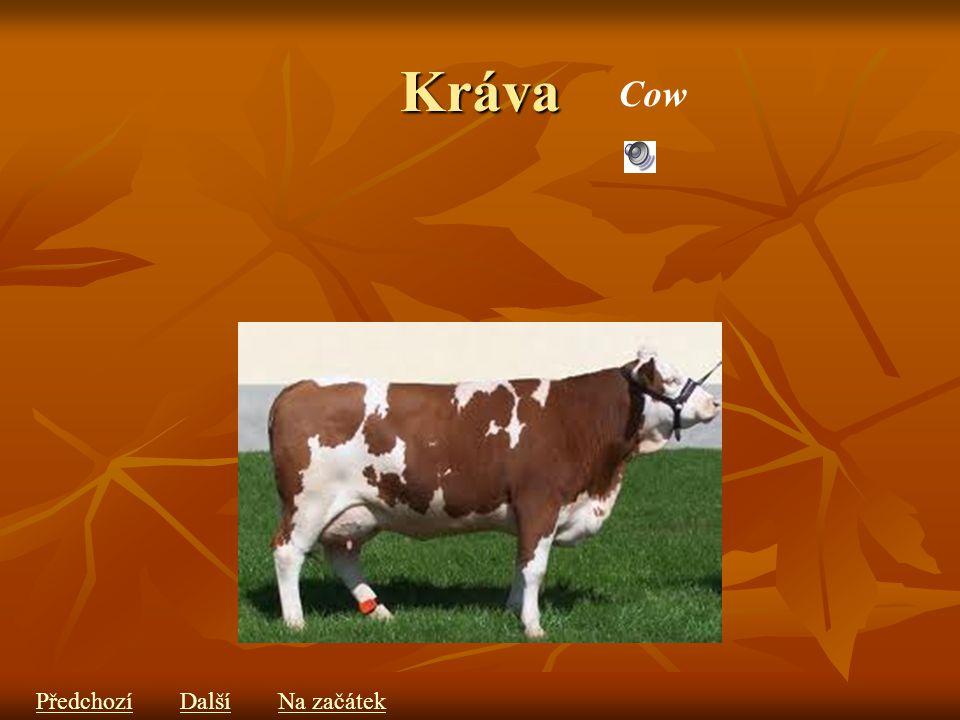 Kráva Cow PředchozíDalšíNa začátek