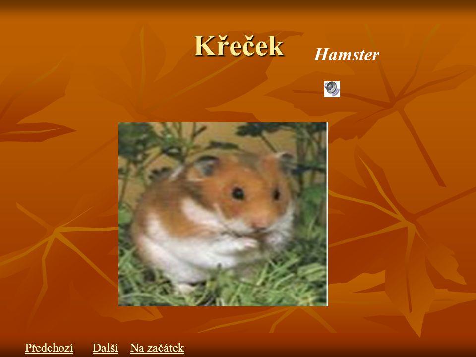 Křeček Hamster PředchozíDalšíNa začátek