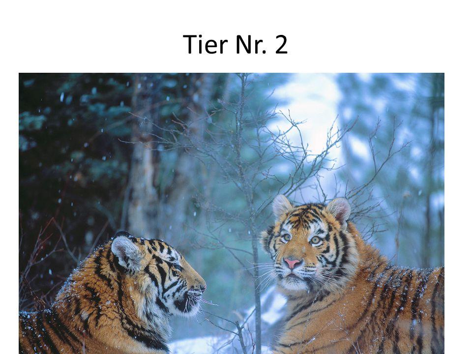 Tier Nr.