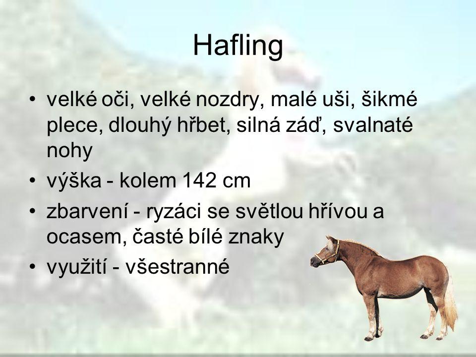 Hafling velké oči, velké nozdry, malé uši, šikmé plece, dlouhý hřbet, silná záď, svalnaté nohy výška - kolem 142 cm zbarvení - ryzáci se světlou hřívo