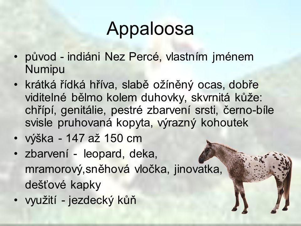 Appaloosa původ - indiáni Nez Percé, vlastním jménem Numipu krátká řídká hříva, slabě ožíněný ocas, dobře viditelné bělmo kolem duhovky, skvrnitá kůže