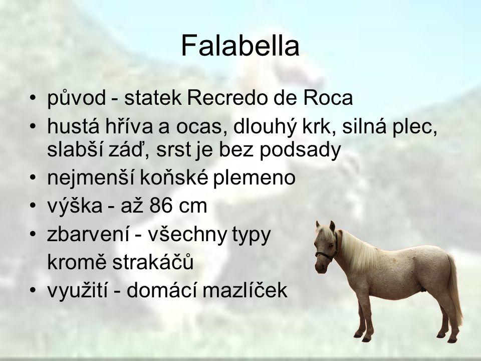 Falabella původ - statek Recredo de Roca hustá hříva a ocas, dlouhý krk, silná plec, slabší záď, srst je bez podsady nejmenší koňské plemeno výška - a