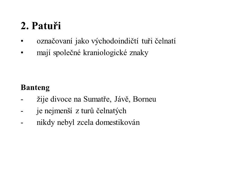 2. Patuři označovaní jako východoindičtí tuři čelnatí mají společné kraniologické znaky Banteng -žije divoce na Sumatře, Jávě, Borneu -je nejmenší z t