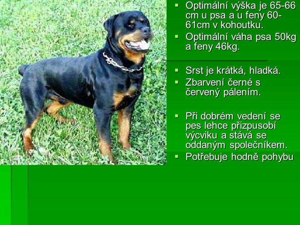 POPIS:  Mohutný,masivní pes s vyvinutou, objemnou muskulaturou, hrubé, silné konstrukce.  Hlava má širokou mozkovnu a výrazný stop. Uši jsou nevelké