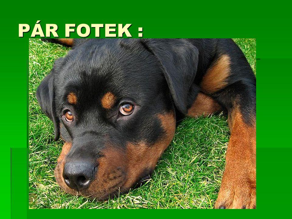  Optimální výška je 65-66 cm u psa a u feny 60- 61cm v kohoutku.  Optimální váha psa 50kg a feny 46kg.  Srst je krátká, hladká.  Zbarvení černé s