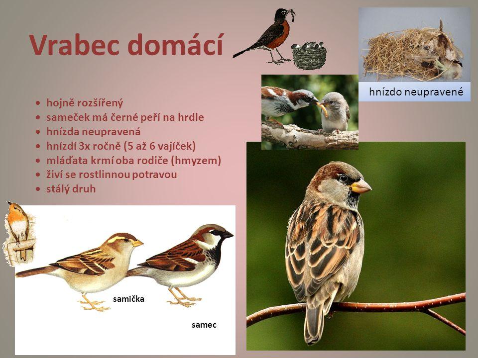 Vrabec domácí samička samec hojně rozšířený sameček má černé peří na hrdle hnízda neupravená hnízdí 3x ročně (5 až 6 vajíček) mláďata krmí oba rodiče