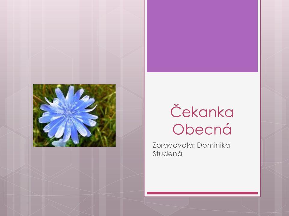 Šířka květů  Její květy jsou široké 3 – 4 cm.