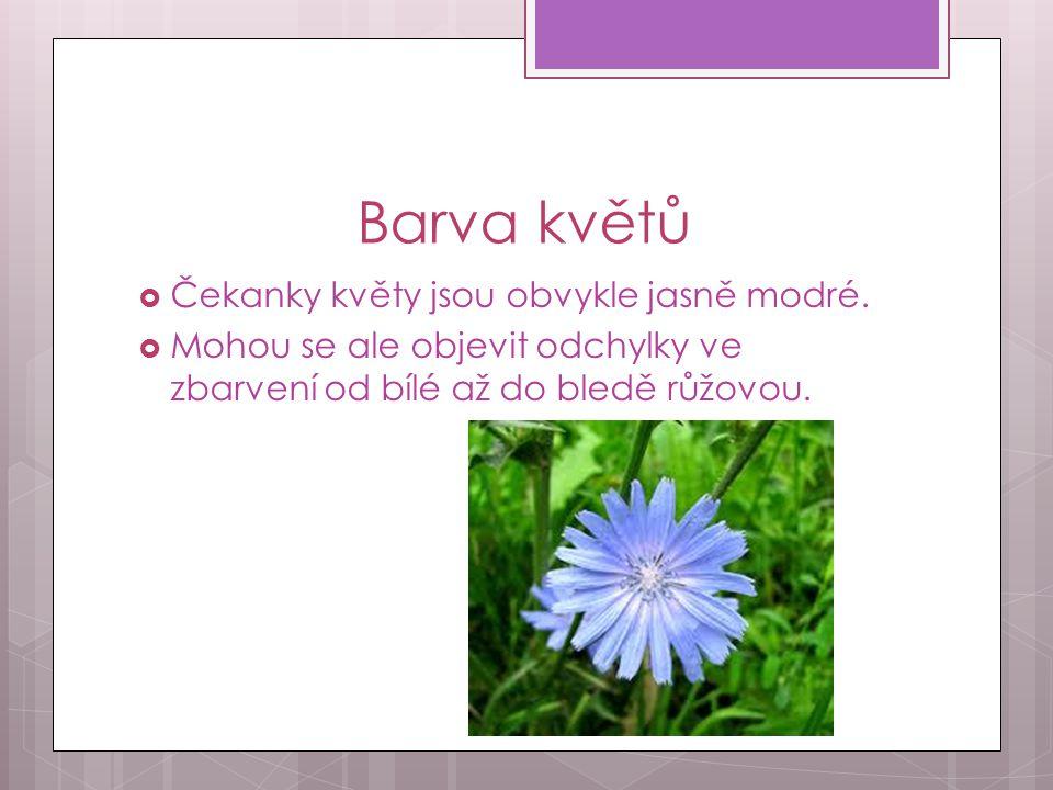 Části těla Čekanky  Skládá se z kořene, květu, stonku a z listů.