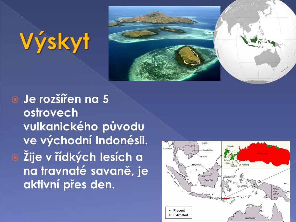  Je rozšířen na 5 ostrovech vulkanického původu ve východní Indonésii.  Žije v řídkých lesích a na travnaté savaně, je aktivní přes den.
