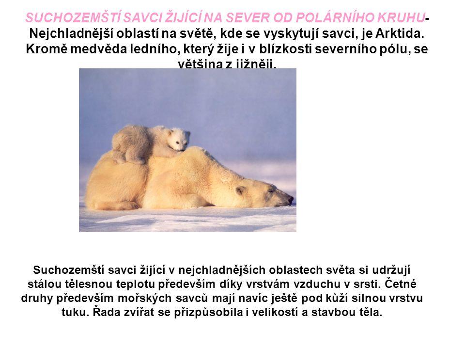 Suchozemští savci žijící v nejchladnějších oblastech světa si udržují stálou tělesnou teplotu především díky vrstvám vzduchu v srsti. Četné druhy před