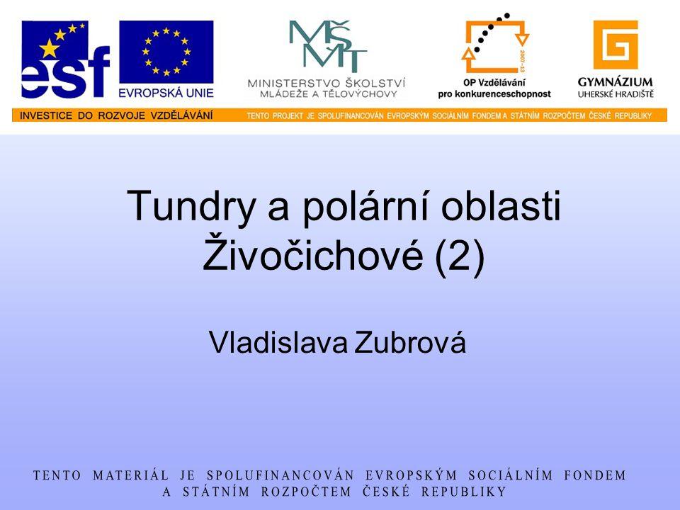 Tundry a polární oblasti Živočichové (2) Vladislava Zubrová