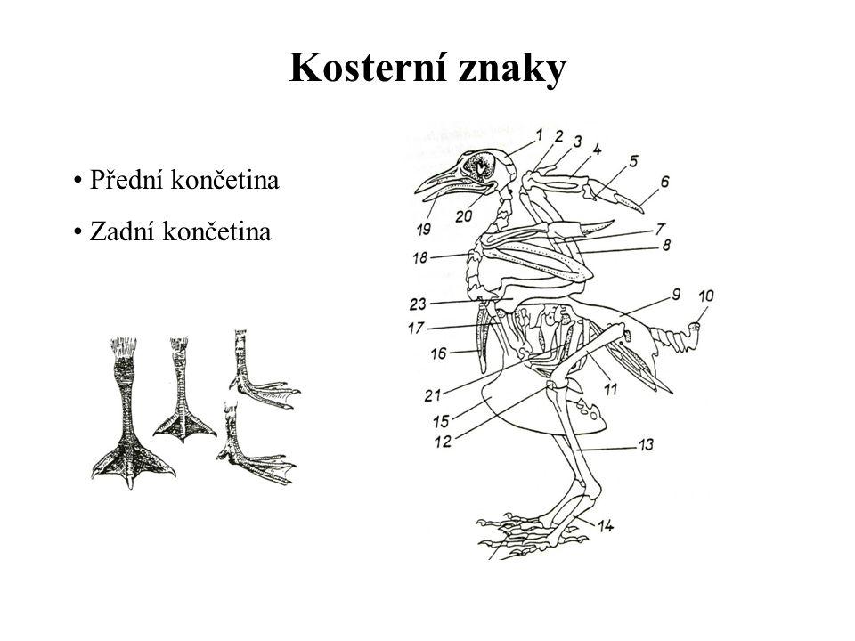 Vývoj, způsob života a životní prostředí Oviparie Tok Monogamie Polygamie Polyandrie Inkubace 14-40 dnů Nekrmiví (nidifugní) Krmiví (nidikolní) Péče- pěvci 14-20 dní - rorýs 50 dní - buřňák 250 dní Potrava - entomofágní - vertebratofágní (ichtyofágní) - semenožraví, plodožraví
