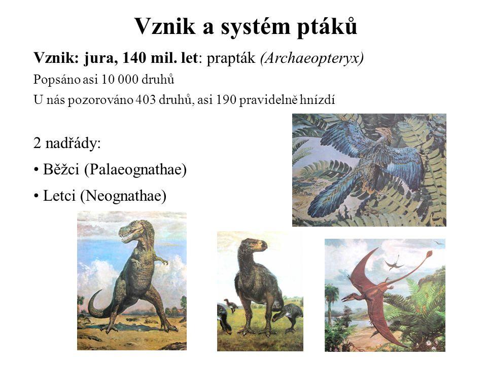 Vznik a systém ptáků Vznik: jura, 140 mil. let: prapták (Archaeopteryx) Popsáno asi 10 000 druhů U nás pozorováno 403 druhů, asi 190 pravidelně hnízdí