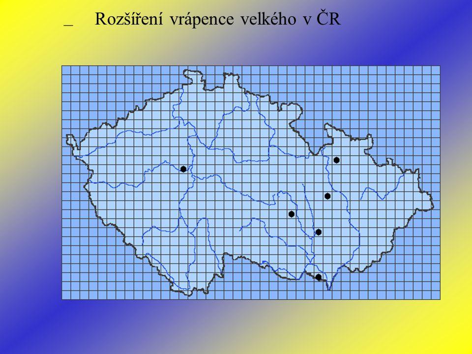 – Rozšíření vrápence velkého v ČR