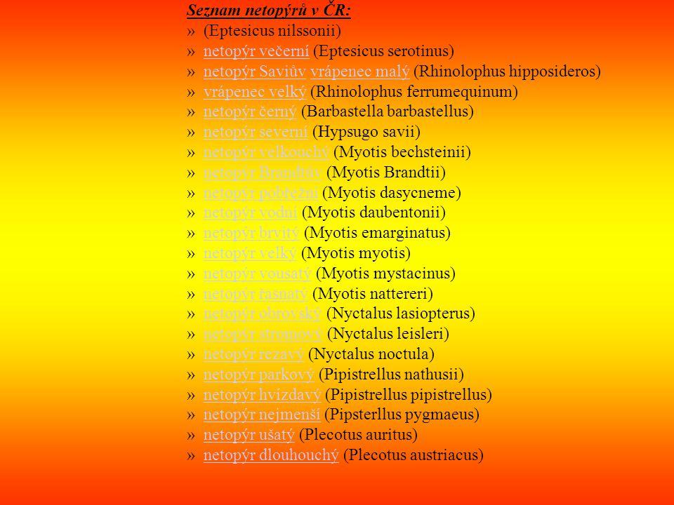 Seznam netopýrů v ČR: »(Eptesicus nilssonii) »netopýr večerní (Eptesicus serotinus)netopýr večerní »netopýr Saviův vrápenec malý (Rhinolophus hipposideros)netopýr Saviůvvrápenec malý »vrápenec velký (Rhinolophus ferrumequinum)vrápenec velký »netopýr černý (Barbastella barbastellus)netopýr černý »netopýr severní (Hypsugo savii)netopýr severní »netopýr velkouchý (Myotis bechsteinii)netopýr velkouchý »netopýr Brandtův (Myotis Brandtii)netopýr Brandtův »netopýr pobřežní (Myotis dasycneme)netopýr pobřežní »netopýr vodní (Myotis daubentonii)netopýr vodní »netopýr brvitý (Myotis emarginatus)netopýr brvitý »netopýr velký (Myotis myotis)netopýr velký »netopýr vousatý (Myotis mystacinus)netopýr vousatý »netopýr řasnatý (Myotis nattereri)netopýr řasnatý »netopýr obrovský (Nyctalus lasiopterus)netopýr obrovský »netopýr stromový (Nyctalus leisleri)netopýr stromový »netopýr rezavý (Nyctalus noctula)netopýr rezavý »netopýr parkový (Pipistrellus nathusii)netopýr parkový »netopýr hvízdavý (Pipistrellus pipistrellus)netopýr hvízdavý »netopýr nejmenší (Pipsterllus pygmaeus)netopýr nejmenší »netopýr ušatý (Plecotus auritus)netopýr ušatý »netopýr dlouhouchý (Plecotus austriacus)netopýr dlouhouchý