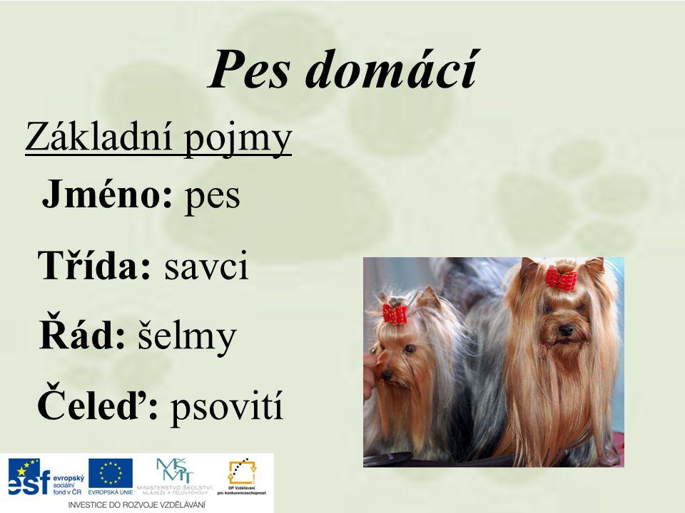 Základní pojmy Pes domácí Jméno: pes Třída: savci Řád: šelmy Čeleď: psovití