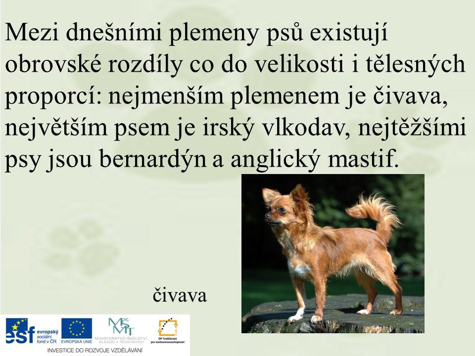 Mezi dnešními plemeny psů existují obrovské rozdíly co do velikosti i tělesných proporcí: nejmenším plemenem je čivava, největším psem je irský vlkoda