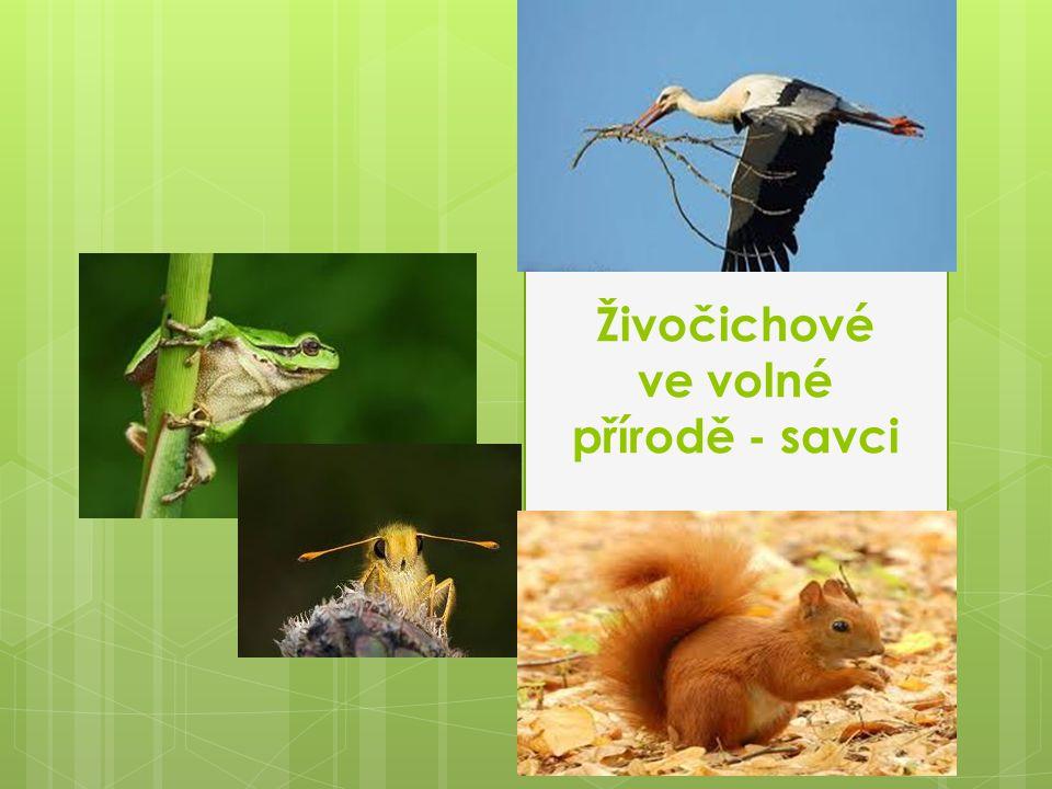 Živočichové ve volné přírodě - savci
