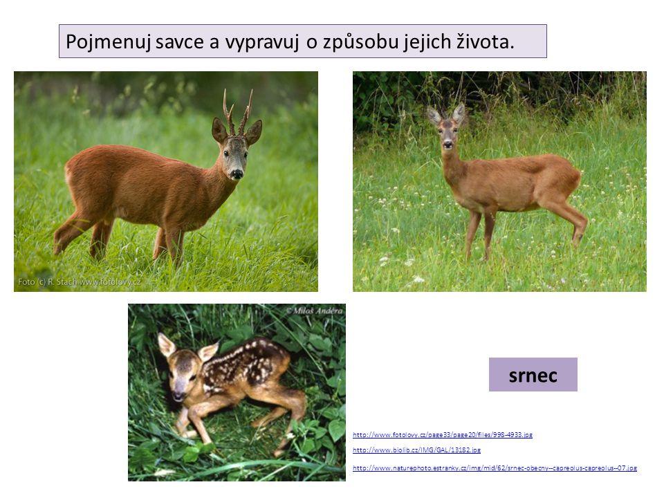 jelen http://www.priroda.cz/clanky/foto/jelen-rodinka.jpg