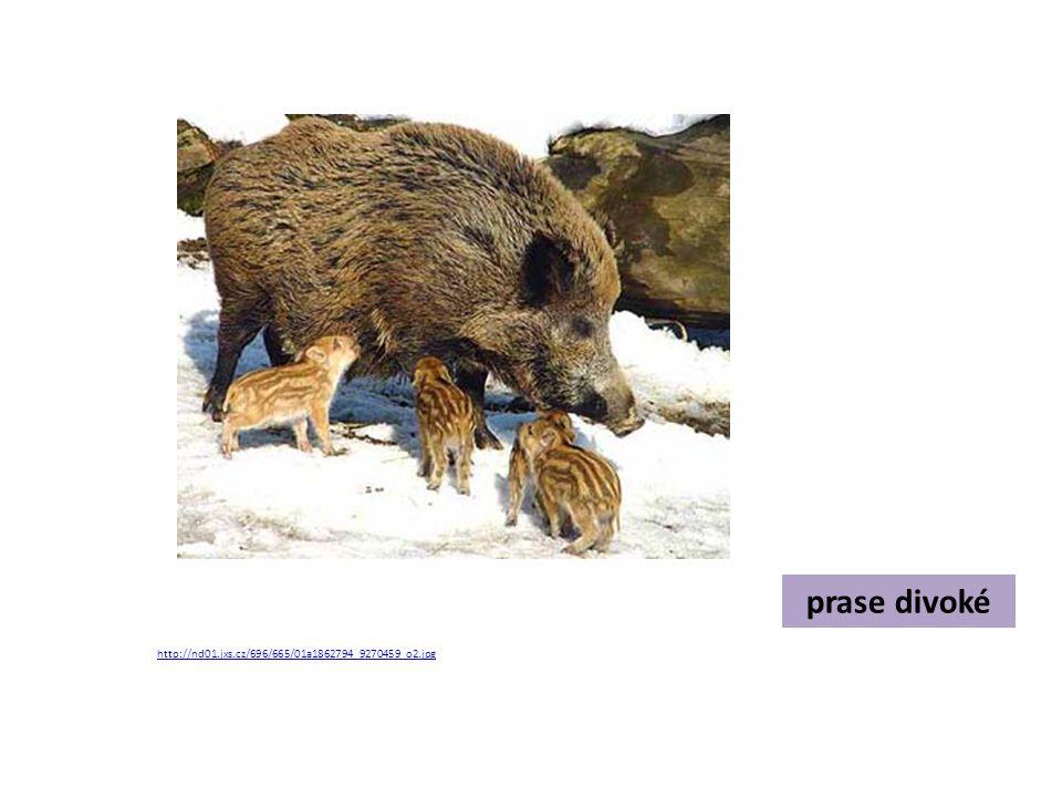 Rozhodni, jak savci přečkávají zimu.