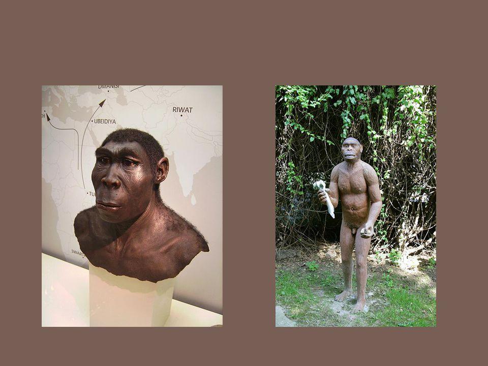 Ženy homo erectus