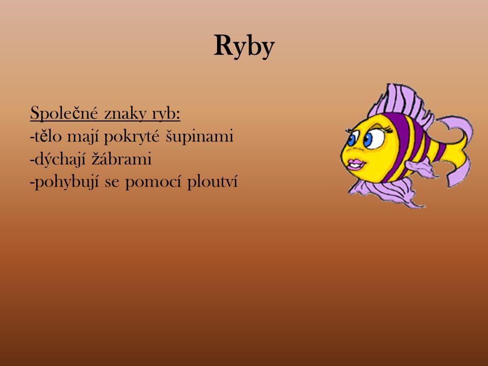 Ryby Spole č né znaky ryb: -t ě lo mají pokryté šupinami -dýchají ž ábrami -pohybují se pomocí ploutví