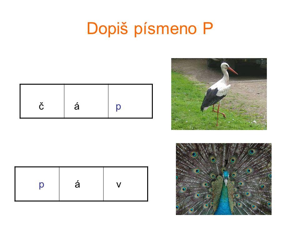 Napiš písmeno P p a v o u k o p i c e