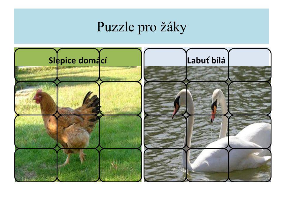 Puzzle pro žáky Slepice domácíLabuť bílá