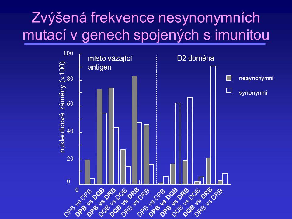 místo vázající antigen 0 2020 6060 80 100100 40 0 nukleotidové záměny (  100) D2 doména DPB vs DPB DPB vs DQB DPB vs DRB DQB vs DQB DQB vs DRB DRB vs