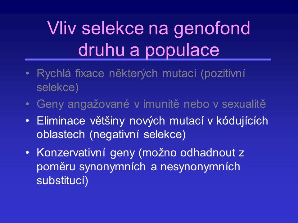 Vliv selekce na genofond druhu a populace Rychlá fixace některých mutací (pozitivní selekce) Geny angažované v imunitě nebo v sexualitě Eliminace větš