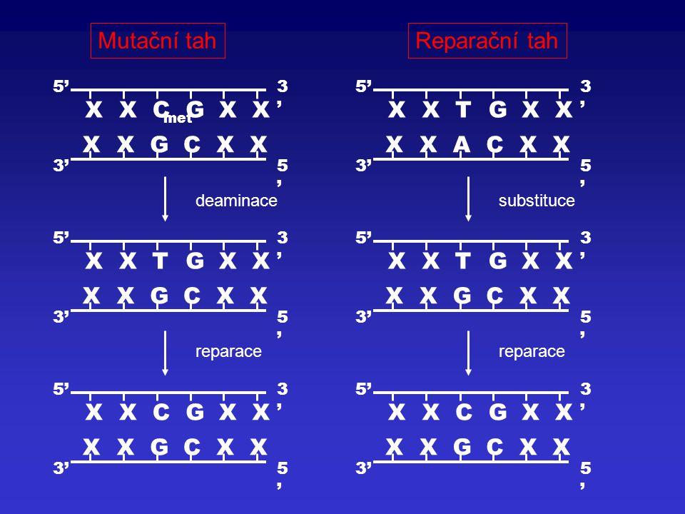Mutační tahReparační tah