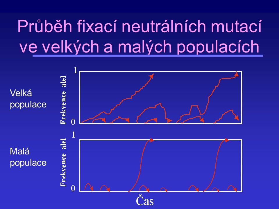 Průběh fixací neutrálních mutací ve velkých a malých populacích Velká populace Malá populace