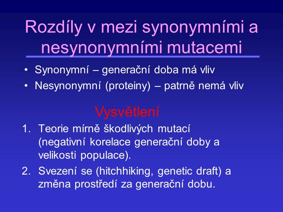 Rozdíly v mezi synonymními a nesynonymními mutacemi Synonymní – generační doba má vliv Nesynonymní (proteiny) – patrně nemá vliv 1.Teorie mírně škodli