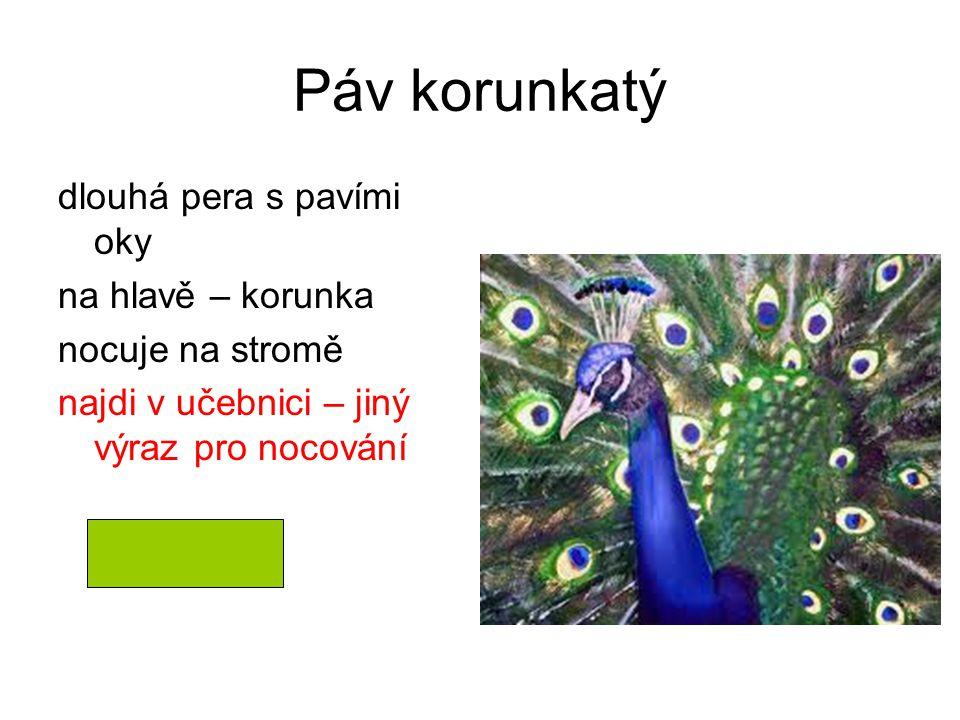 hřadování Páv korunkatý dlouhá pera s pavími oky na hlavě – korunka nocuje na stromě najdi v učebnici – jiný výraz pro nocování