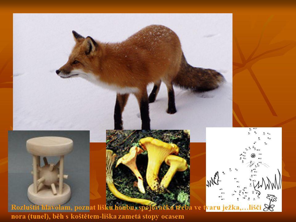 Rozluštit hlavolam, poznat lišku houbu, spojovačka třeba ve tvaru ježka,…liščí nora (tunel), běh s koštětem-liška zametá stopy ocasem