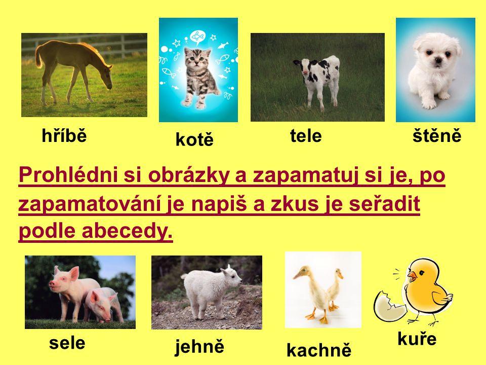 Kontrola: Zvířata seřazená podle abecedy: hříbě, kotě, tele, štěně sele, jehně, kachně, kuře 1.
