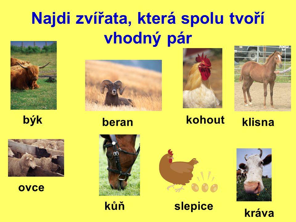 Najdi zvířata, která spolu tvoří vhodný pár býk beran kráva ovce kůň kohout slepice klisna