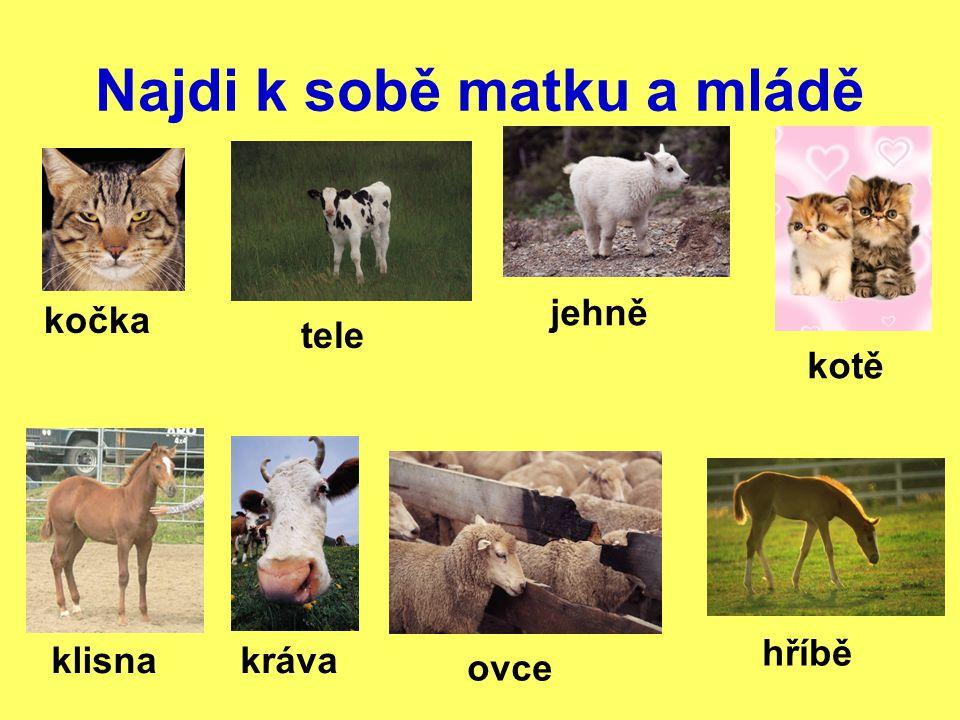 Kontrola sameček a samička: býk a kráva beran a ovce kohout a slepice kůň a klisna samička a mládě: kočka a kotě klisna a hříbě kráva a tele ovce a jehně