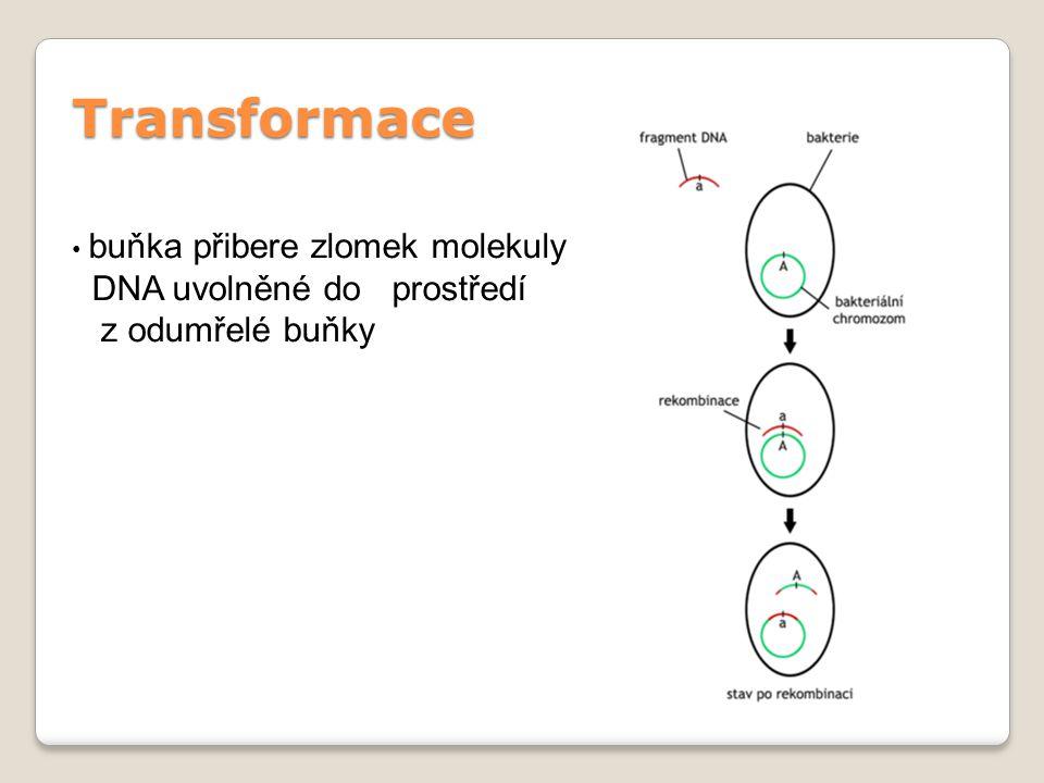 Transformace buňka přibere zlomek molekuly DNA uvolněné do prostředí z odumřelé buňky