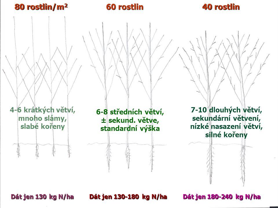 80 rostlin/m 2 60 rostlin 40 rostlin Dát jen 130 kg N/ha Dát jen 130-180 kg N/ha Dát jen 180-240 kg N/ha 4-6 krátkých větví, mnoho slámy, slabé kořeny