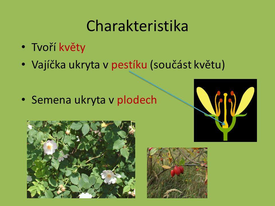 Charakteristika Tvoří květy Vajíčka ukryta v pestíku (součást květu) Semena ukryta v plodech