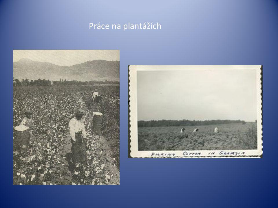 Práce na plantážích