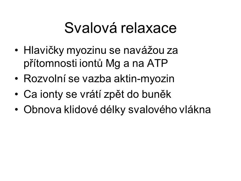Svalová relaxace Hlavičky myozinu se navážou za přítomnosti iontů Mg a na ATP Rozvolní se vazba aktin-myozin Ca ionty se vrátí zpět do buněk Obnova kl