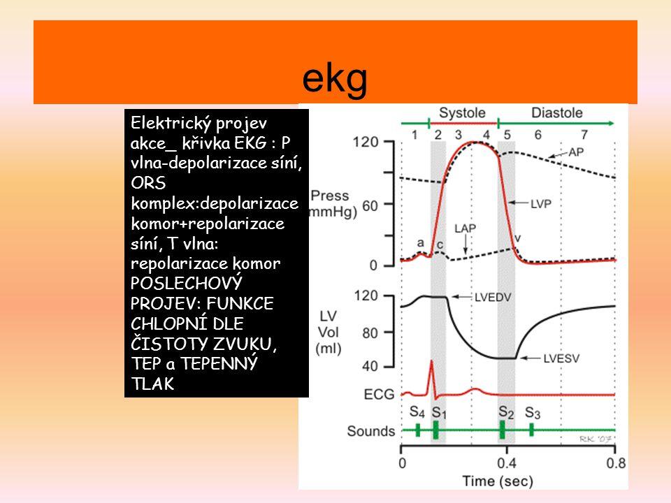 ekg Elektrický projev akce_ křivka EKG : P vlna-depolarizace síní, ORS komplex:depolarizace komor+repolarizace síní, T vlna: repolarizace komor POSLEC