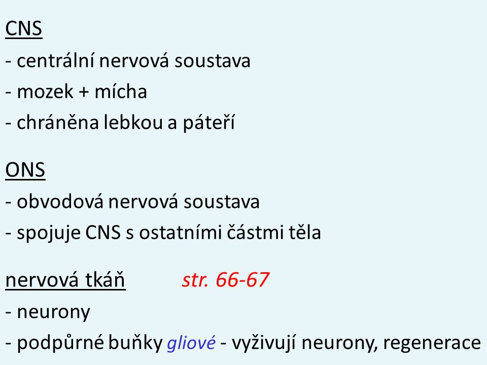 CNS - centrální nervová soustava - mozek + mícha - chráněna lebkou a páteří ONS - obvodová nervová soustava - spojuje CNS s ostatními částmi těla nervová tkáň str.