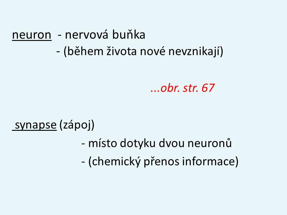 neuron - nervová buňka - (během života nové nevznikají)...obr. str. 67 synapse (zápoj) - místo dotyku dvou neuronů - (chemický přenos informace)