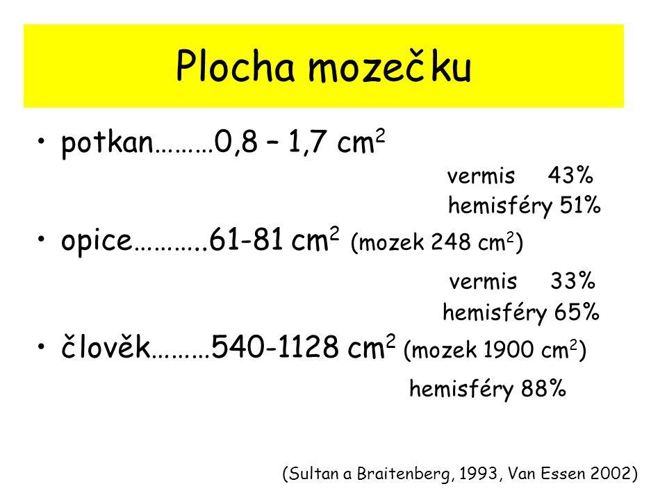 Plocha mozečku potkan………0,8 – 1,7 cm 2 vermis 43% hemisféry 51% opice………..61-81 cm 2 (mozek 248 cm 2 ) vermis 33% hemisféry 65% člověk………540-1128 cm 2