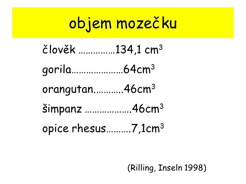 objem mozečku člověk ……………134,1 cm 3 gorila…………………64cm 3 orangutan.………..46cm 3 šimpanz ……………….46cm 3 opice rhesus……….7,1cm 3 (Rilling, Inseln 1998)