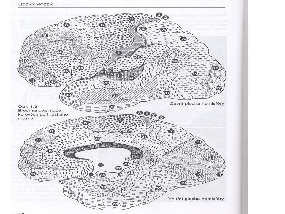 vývojové malformace mozečku agenese – hypoplasie mozečku motorické příznaky - od congenitální ataxie po normální stav kognitivní stav – od MR po nepoškozené fungování (Daum, Ackerman 1995 - review)