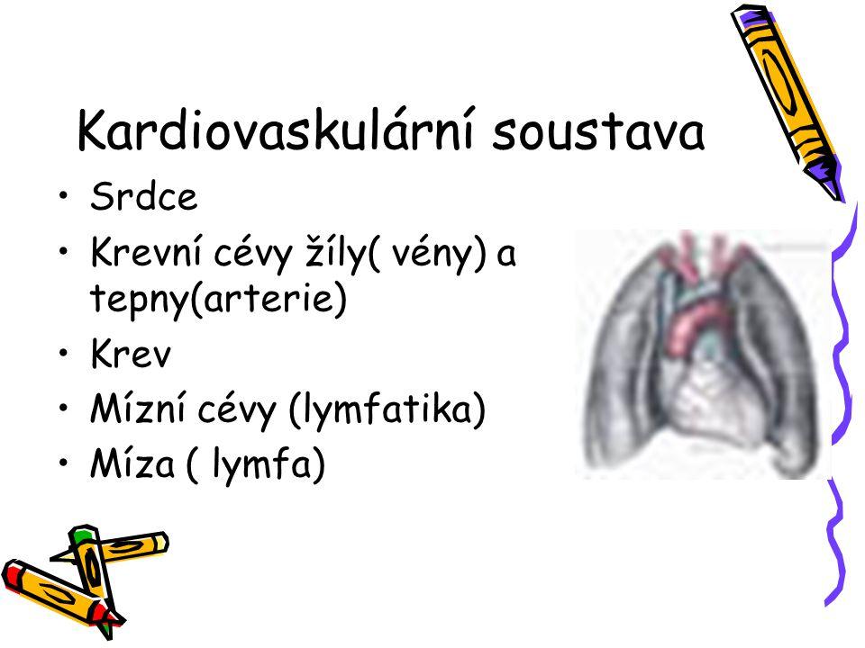 Kardiovaskulární soustava Srdce Krevní cévy žíly( vény) a tepny(arterie) Krev Mízní cévy (lymfatika) Míza ( lymfa)
